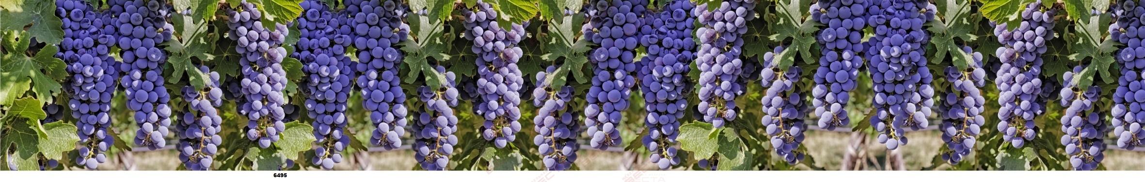 Фартуки Еда, напитки,фрукты,ягоды-31